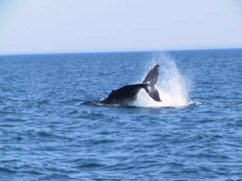 whales can be seen along the Irish Loop